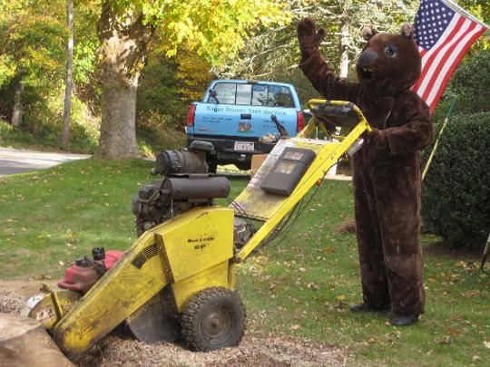 Eager-Beaver-stump-grinding